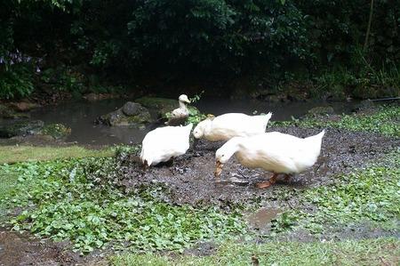 泥遊び1.jpg